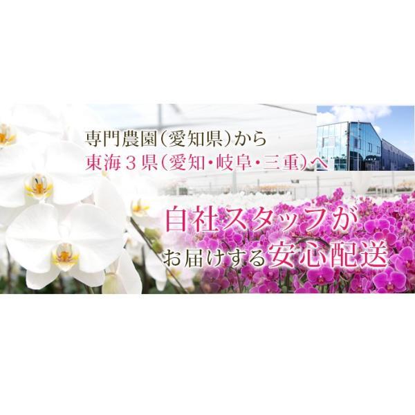 胡蝶蘭 開店祝い 開業祝い 開院祝い 大輪 正月 お歳暮 ギフト お祝い お供え 10本立ち 108000 [r-tokubetu10f-fw]|ranbo|04