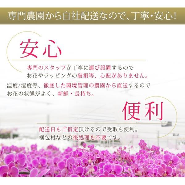 胡蝶蘭 開店祝い 開業祝い 開院祝い 大輪 正月 お歳暮 ギフト お祝い お供え 10本立ち 108000 [r-tokubetu10f-fw]|ranbo|05