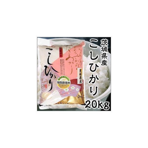 Aランク 令和2年度産 茨城県産 こしひかり 20kg 特別栽培米 新米