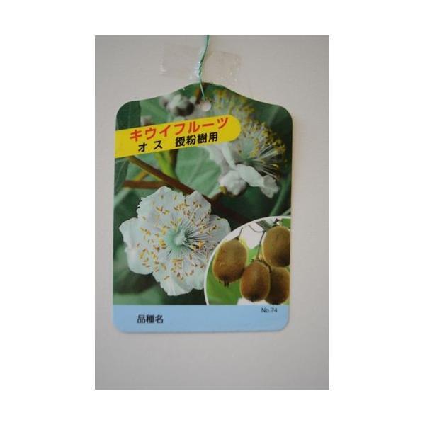 果樹苗 キウイフルーツ トムリ(オス)/12cmポット|rose-herb