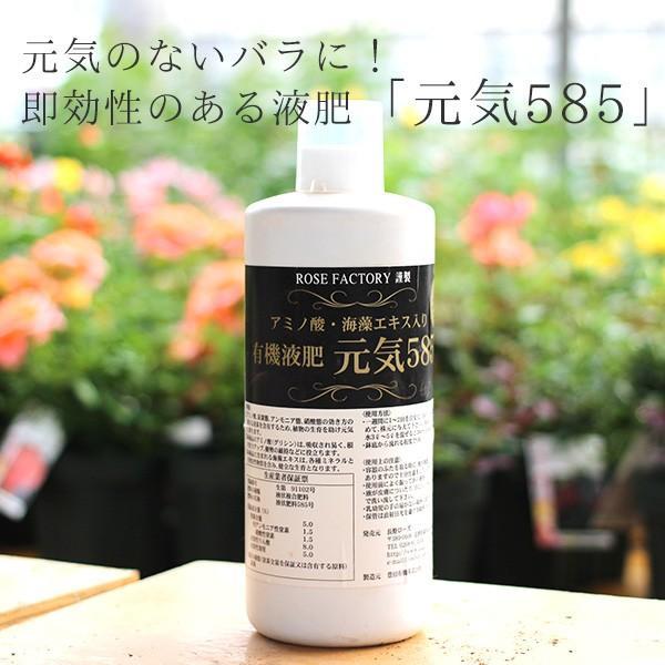 バラ 液体肥料 有機液肥 バラ苗