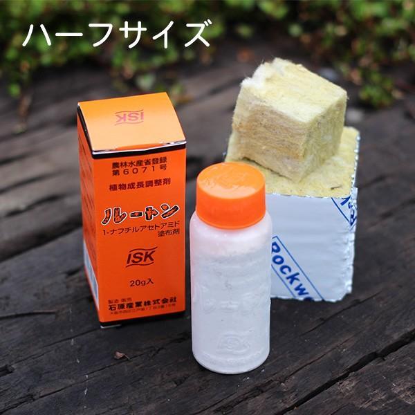 自宅で挑戦!挿し木用ロックウールと発根促進剤ルートンのスターターズセット/ハーフサイズ