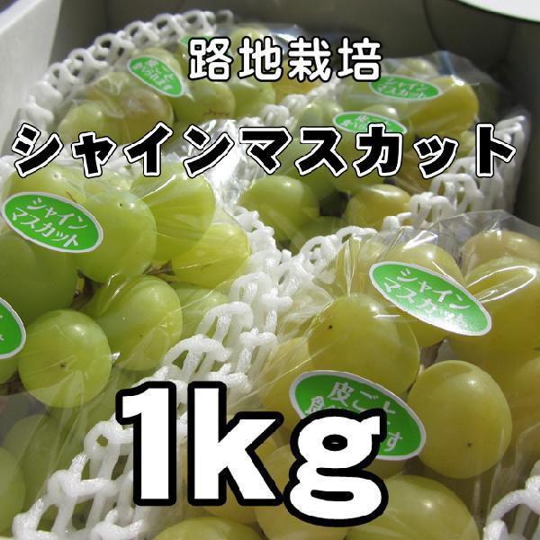 お試し個数限定 シャインマスカット 1kg送料無料 数量限定(路地栽培)長野産シャインマスカットぶどうギフト にも人気