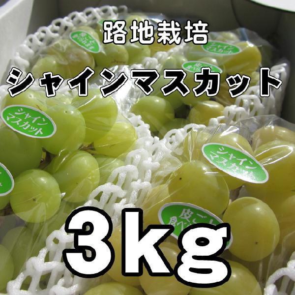 送料無料 数量限定 路地栽培 長野産 シャインマスカット ぶどう 3kg特選 長野ぶどう・ブドウ ギフト にも人気
