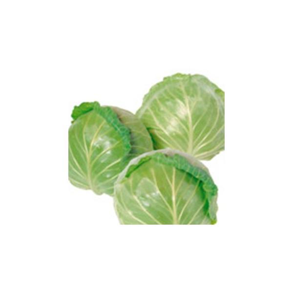 キャベツの種 アーリーボール 実咲小袋 ( 野菜の種 )