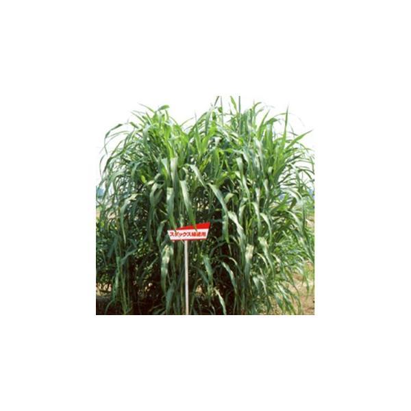 緑肥の種 スダックス 緑肥用 1kg
