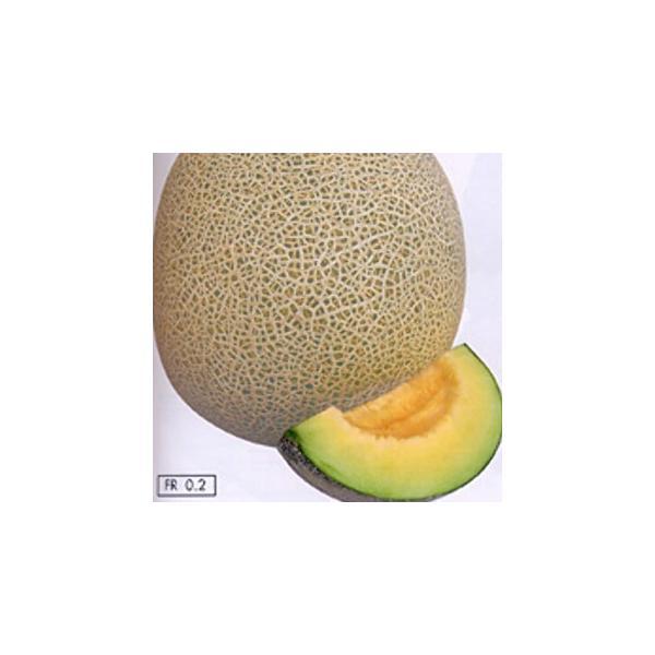 メロンの種 リムジン 小袋(6粒) ( 野菜の種 )