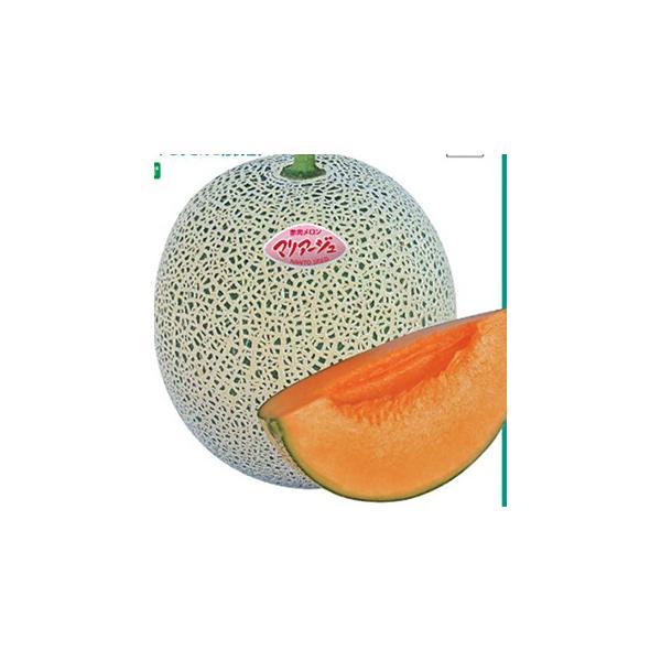 メロンの種 マリアージュ盛夏系 100粒 ( 野菜の種 )
