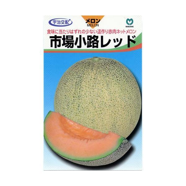 市場小路レッド (メロンの種) 100粒 ( 野菜の種 )