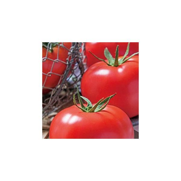 トマトの種 桃太郎ホープ  1000粒 ( 野菜の種 )