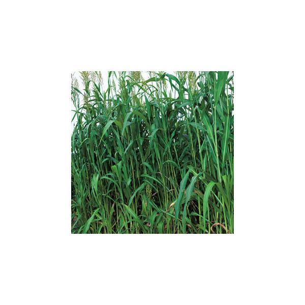 緑肥の種 ラッキーソルゴーNEO 1kg