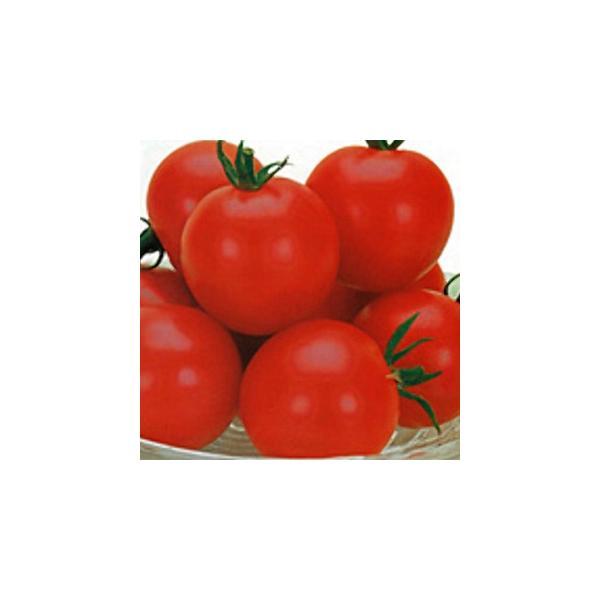 ミニトマトの種 スィートルビー 100粒 ( 野菜の種 )