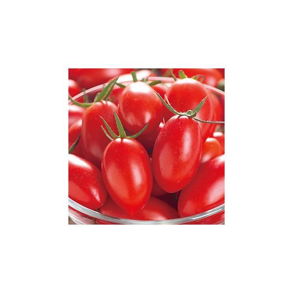 ミニトマトの種 アイコ ペレット200粒 ( 野菜の種 )