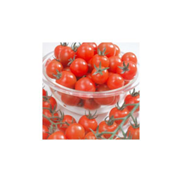 ミニトマトの種 ミニキャロル 5ml ( 野菜の種 )