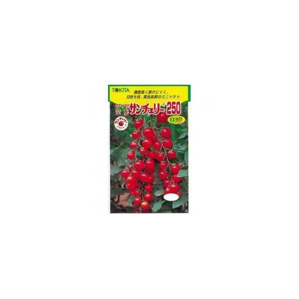 ミニトマトの種 サンチェリー250 100粒 ( 野菜の種 )