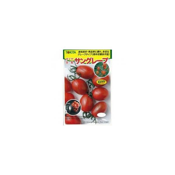 ミニトマトの種 サングレープ 小袋(10粒) ( 野菜の種 )