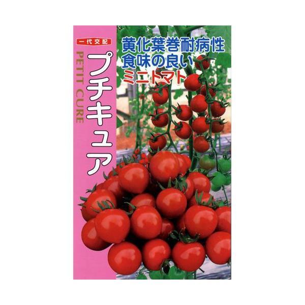 ミニトマトの種 プチキュア 500粒 ( 野菜の種 )