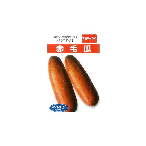 沖縄赤毛瓜 (ウリの種) 1dl ( 野菜の種 )