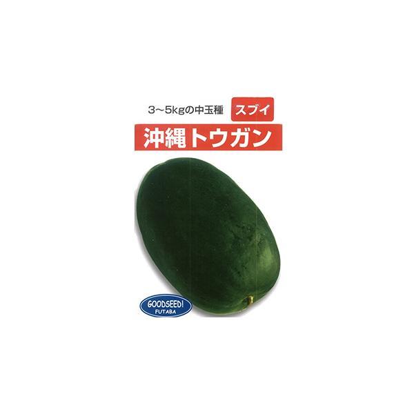 沖縄冬瓜 (ウリの種) 小袋 約1dl ( 野菜の種 )