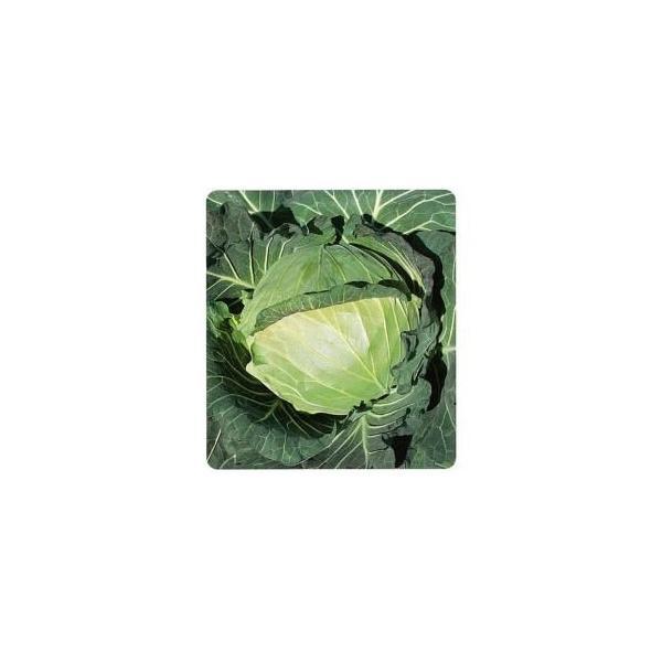 キャベツの種 YR暖流 小袋 約1.5ml ( 野菜の種 )