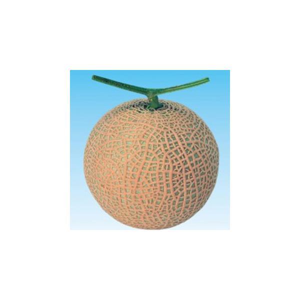 メロンの種 雅夏系2号 100粒 ( 野菜の種 )
