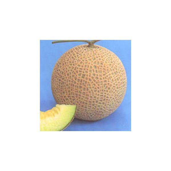 メロンの種 クレア 100粒 ( 野菜の種 )