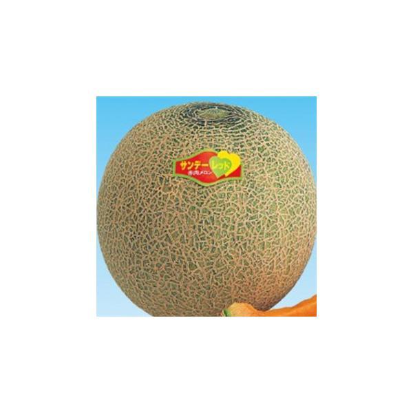メロンの種 サンデーレッド 100粒 ( 野菜の種 )