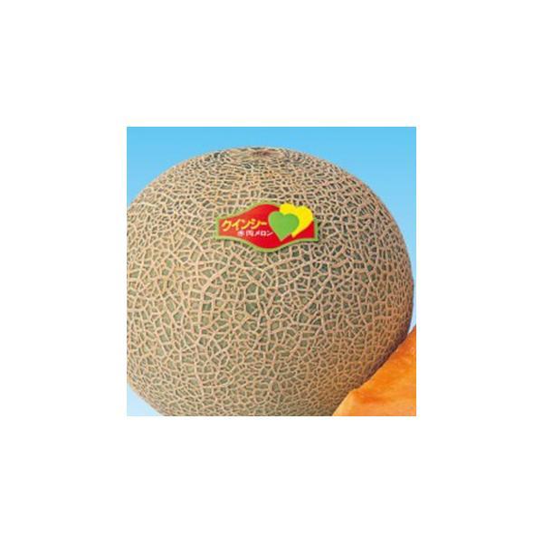 メロンの種 春のクインシー 100粒 ( 野菜の種 )