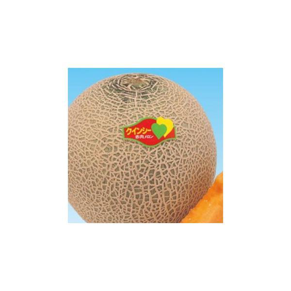 メロンの種 初夏のクインシー 100粒 ( 野菜の種 )