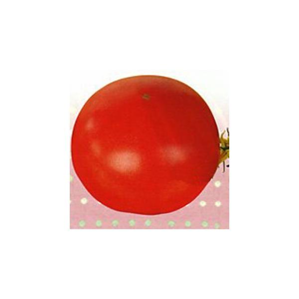 大玉トマトの種 福健 20ml ( 野菜の種 )