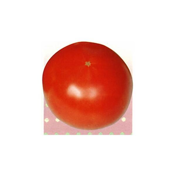 大玉トマトの種 ダックス 20ml ( 野菜の種 )