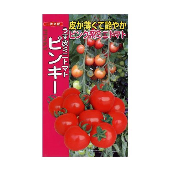 ミニトマトの種 ピンキー 500粒 ( 野菜の種 )