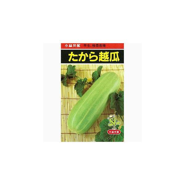 ウリの種 たから越瓜 30粒 ( 野菜の種 )