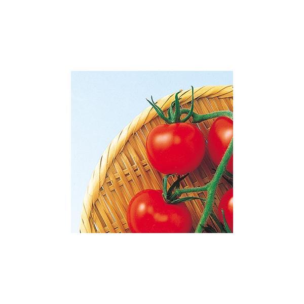 トマトの種 スーパーミディ 1000粒 ( 野菜の種 )
