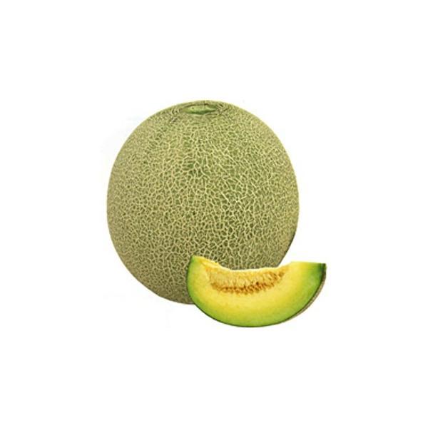 メロンの種 シャロン2号 小袋(7粒) ( 野菜の種 )