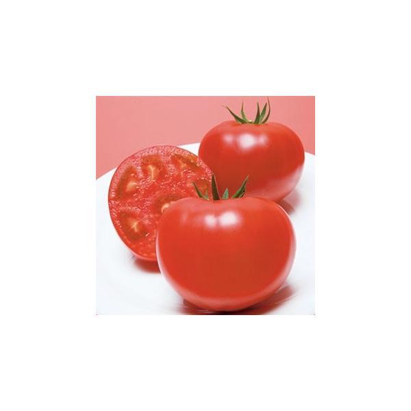トマトの種 CF桃太郎J  1000粒 ( 野菜の種 )