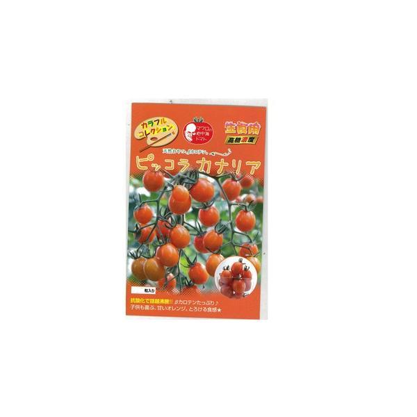 ミニトマトの種 ピッコラカナリア 8粒 ( 野菜の種 )