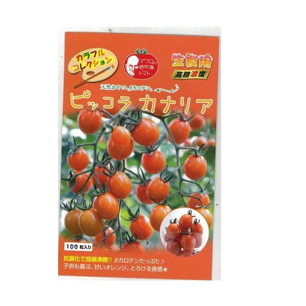 ミニトマトの種 ピッコラカナリア 1,000粒 ( 野菜の種 )