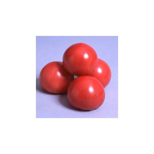 トマトの種 パルト  1000粒 ( 野菜の種 )
