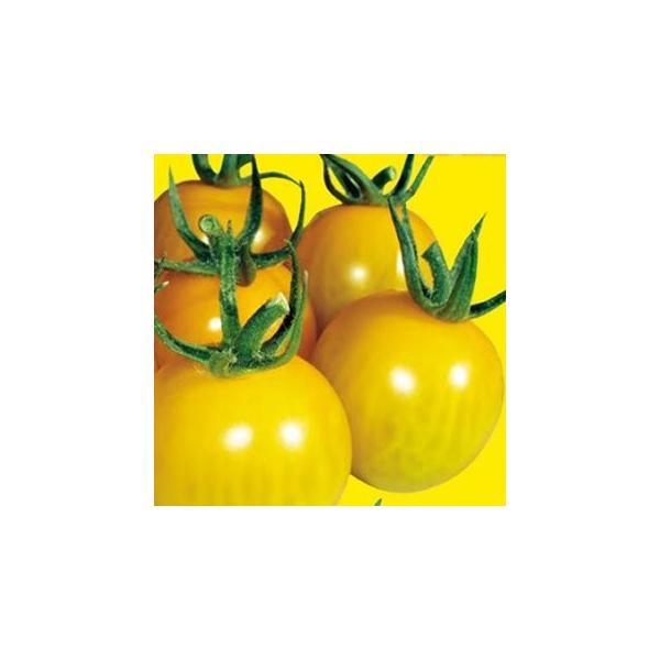 ミニトマトの種  きら〜ず  500粒 ( 野菜の種 )