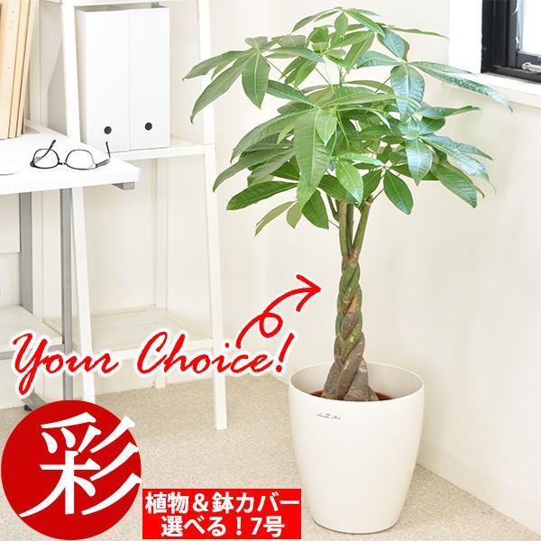 観葉植物 種類 選べる 大型 7号鉢 パキラ サンスベリア ポトス 幸福の木 ケンチャヤシ ドラセナ ユッカ 室内 インテリア おしゃれ