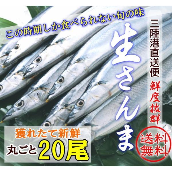 生サンマ 旬の獲れたて20尾入り 三陸産 産地直送 刺身もOK!鮮度抜群 1尾120g以上 送料無料 秋刀魚 さんま sakanaya-ebisu