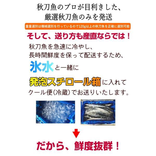 生サンマ 旬の獲れたて20尾入り 三陸産 産地直送 刺身もOK!鮮度抜群 1尾120g以上 送料無料 秋刀魚 さんま sakanaya-ebisu 05