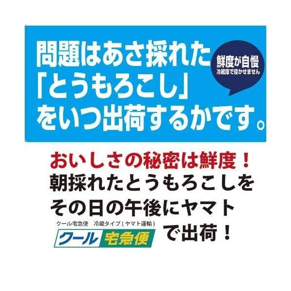北海道産 朝採れとうもろこし ゴールドラッシュ(一番果) 2Lサイズ×10本セット|sakenosakana|03