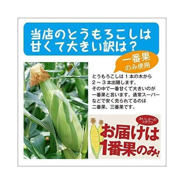 北海道産 朝採れとうもろこし ゴールドラッシュ(一番果) 2Lサイズ×10本セット|sakenosakana|06