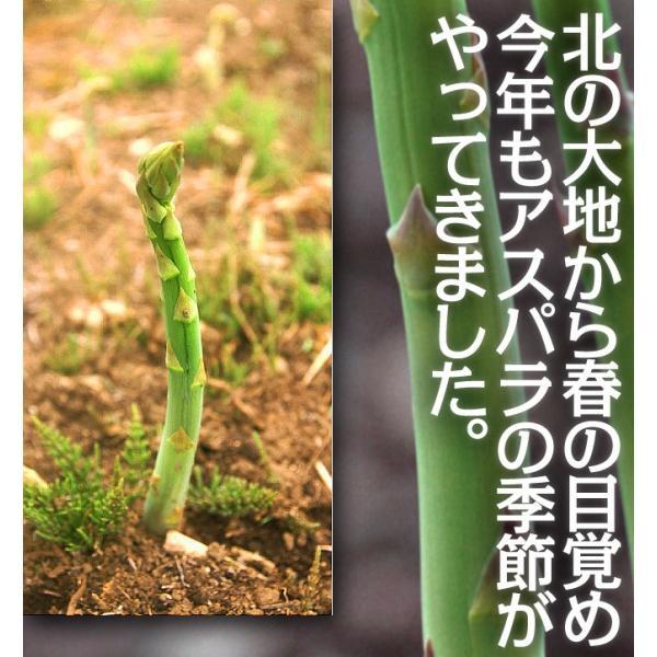 北海道産 グリーンアスパラ 1kg L〜2Lサイズ / 産地直送 送料無料|sakenosakana|02