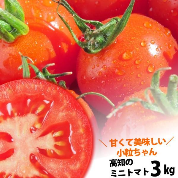 プチトマト約3kg 高知のミニトマト