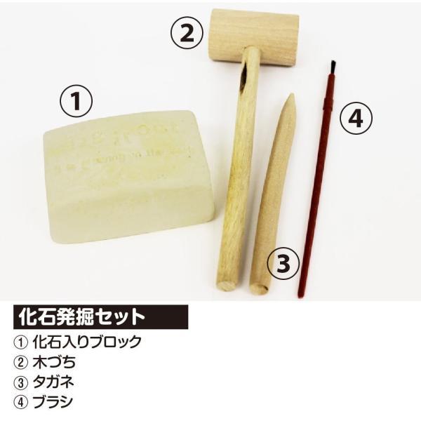 触れる図鑑シリーズ vol.04 化石発掘 |sakusaku3939|03