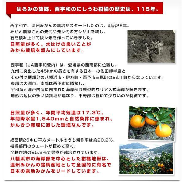 2019年発送 送料無料 愛媛県より産地直送 JAにしうわ はるみ 3LからMサイズ 5キロ(18から35玉)ハルミ|sanchimarugotoouen|06