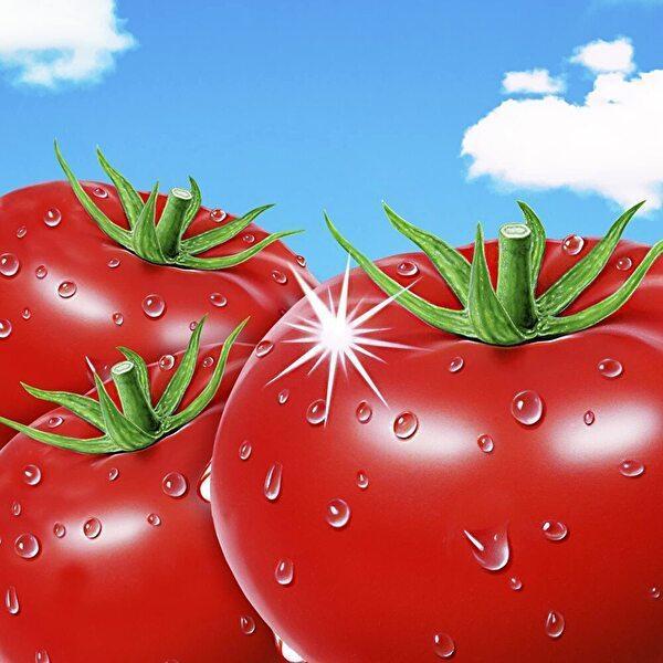 アサヒ バヤリース さらさら毎日おいしくトマト 350g缶×24本入 Bireley's sanchoku-support 02